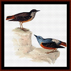 rock thrush - wildlife cross stitch pattern by cross stitch collectibles