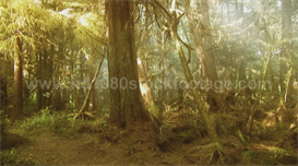 foggy or smokey rainforest hd stock video footage