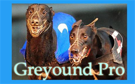 betfair greyhound lay pro