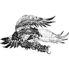 screaming eagle vector illustration