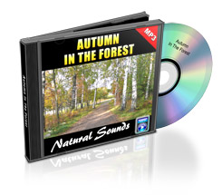 autumn in the forest - natural sounds