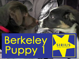SIRIUS Puppy Class Berkeley P1 | Movies and Videos | Educational