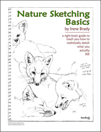 Nature Sketching Basics | eBooks | Arts and Crafts