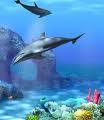 Dolphins | Audio Books | Self-help
