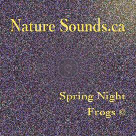 spring night frogs