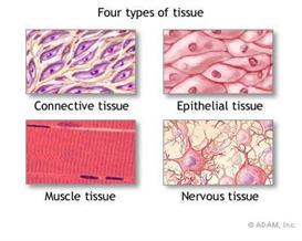 tissue 2010
