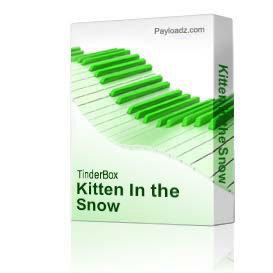 kitten in the snow