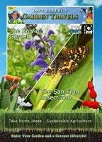 garden travels  the salvia garden /  the san fran insect zoo
