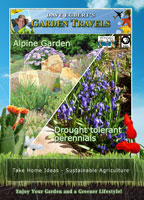 garden travels  alpine garden / drought tolerant perennials
