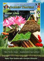 garden travels  water lilies / honey