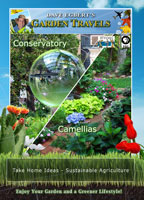 garden travels  conservatory / camellias
