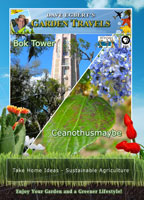 Garden Travels  Bok Tower/ Ceanothusmaybe | Movies and Videos | Action