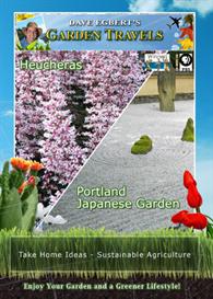 garden travels  heucheras / portland japanese garden