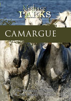 Nature Parks  CAMARGUE Provence, France   Movies and Videos   Action