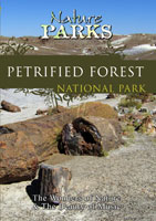 Nature Parks  PETRIFIED FOREST NATIONAL PARK Arizona | Movies and Videos | Action