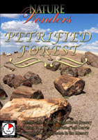 nature wonders  petrified forest arizona u.s.a.