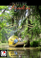 Nature Wonders  EVERGLADES Florida U.S.A. | Movies and Videos | Action