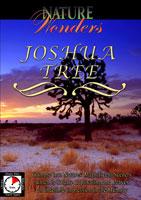 nature wonders  joshua tree national park california u.s.a.