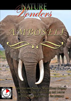 nature wonders  amboseli kenya