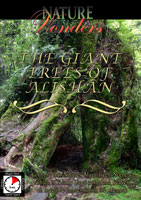 Nature Wonders the GIANT TREES OF ALISHAN Taiwan | Movies and Videos | Action