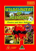 wildflowers of australia flowers and their habitats