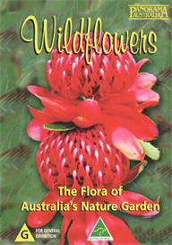 wildflowers the flora of australia's nature garden