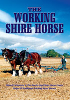 The Working Shire Horse | Movies and Videos | Action