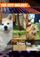 the city walker  pets like cities too