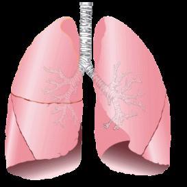 respiratory 2011