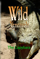wild venezuela the capybara dvd ferraro nature films