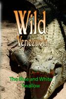 wild venezuela the blue and white swallow dvd ferraro nature films