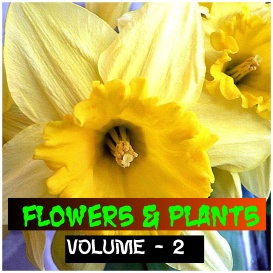 flowers and plants - volume - 2