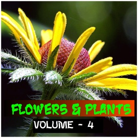 Flowers And Plants - Volume - 4 | Photos and Images | Botanical