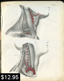 Vertebral Artery Anatomy Print | Photos and Images | Vintage