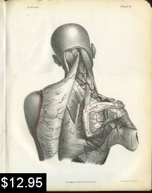 Arteries of the Neck and Shoulder Anatomy Print | Photos and Images | Vintage