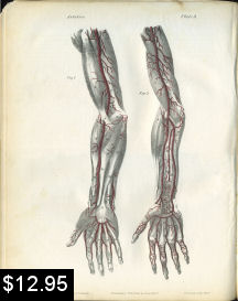 Arteries of the Arm Anatomy Print | Photos and Images | Vintage