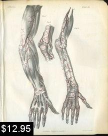 arteries of the arm anatomy print