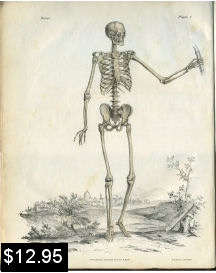 human skeleton anatomy print