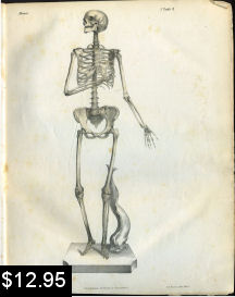 anatomy print of the skeleton