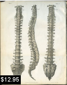 Spinal Column Anatomy Print Chiropractic | Photos and Images | Vintage
