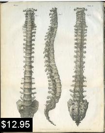 spinal column anatomy print chiropractic