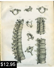 cervical thoracic spinal anatomy print