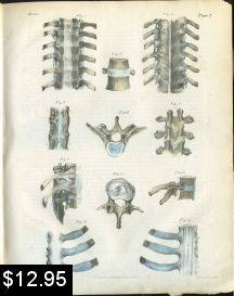 Spinal Anatomy Print | Photos and Images | Vintage