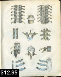 spinal anatomy print