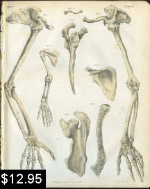 Bones of the Arm Anatomy Print | Photos and Images | Vintage
