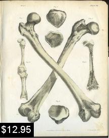 bones of the leg anatomy print