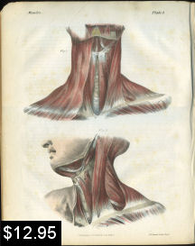 muscles of the neck anatomy print