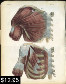 muscles of the shoulder anatomy print