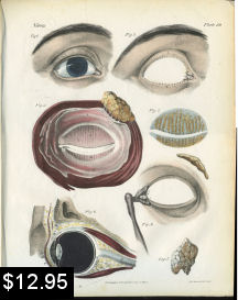 Eye Anatomy Print | Photos and Images | Vintage