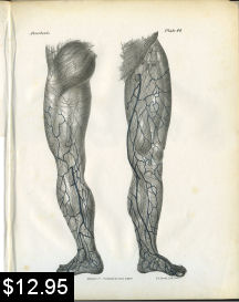 Leg Anatomy Print | Photos and Images | Vintage